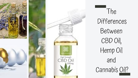 CBD Oil vs Hemp Oil vs Cannabis Oil